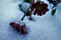 Une bonne et heureuse année.....c'est le 14.janvier....