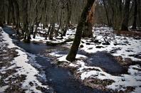Dans les bois....