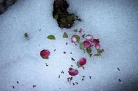 En nocturne.....nature hivernale....