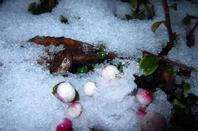L'hiver en nocturne....