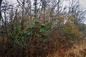 Les  oiseaux métalliques et la pluie hivernale ...