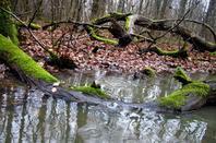 La Bagasse....petite forêt de Ferney-Voltaire....