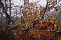 Nature hivernale...a la sortie de la  ville...