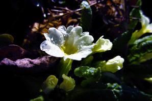 Un petit avant-gout de printemps...