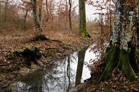 Promenade dans les bois...