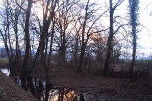 Promenade...matin d'hiver...