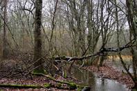 Dans les bois..................