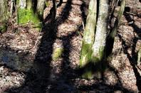 Les bois....Bois de la Bagasse....
