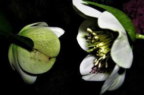 En nocturne....la nature printanière...