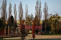 Parc de la ville, Parc de la Tire...