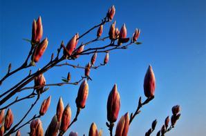 Les arbres sont..fleuries...