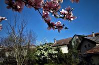 La ville est en fleur......ma petite ville à moi....