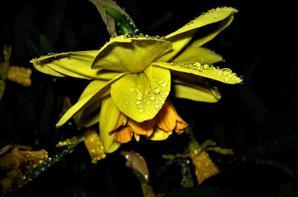 La nuit est...pluvieuse...