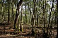 Dans les bois......