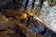 Nature des bois..............