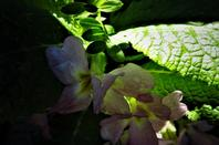 La richesse de sol...fleurs sauvages....