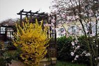 Jardin de la ville....