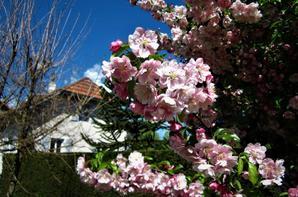 La ville en fleur......................