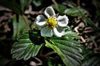 La belle flore de nos bois....