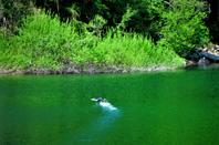 2 lacs cristallins....les symboles de beauté de l'Ain...