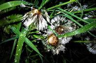 Pluie....et la nature en nocturne...