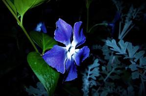 La nuit en bleu..ou bleu-nuit....