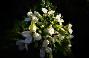 Au Soleil de printemps....la flore....
