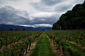 Par la vigne de la ville.....la promenade.....
