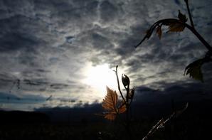 Magie de couché du Soleil....la petite vigne...