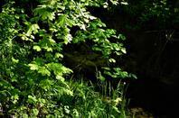 Dans les bois..........