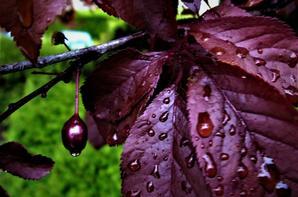 La pluie printanière....