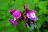 La flore en fleur......la pluie pour tout embellir....