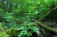 Bagasse....notre petite forêt....