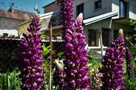 Les belles fleurs de la ville................