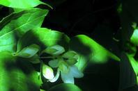 Ombres et les fleurs des bois......
