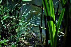 Colovrex...le petit étang de la ville...
