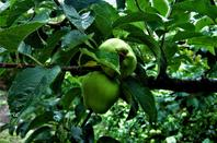 Pommes....