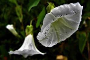 L'été pluvieux...