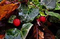 Fruits d'été...