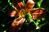 Fleurs et fruits de la ville....