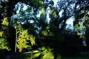 Promenade du matin...
