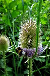 """Les fleurs de tout beauté....beauté """"piquante"""" ..."""