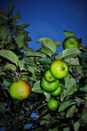 Pommes.....