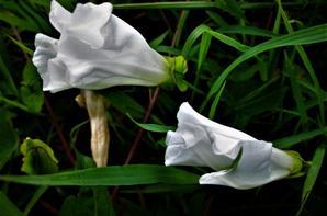 Nature de champ....nature d'été...