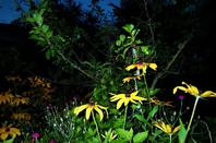 Jardin en  nocturne....