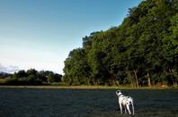 En promenade du soir....Soleil et son ciel bleu....