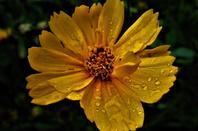 La pluie......enfin.....
