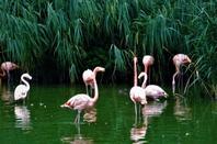 Dans le Parc des oiseaux....