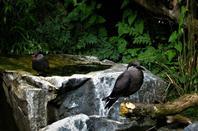 Des superbes oiseaux...