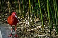 Dans les Dombes...le parc des oiseaux....